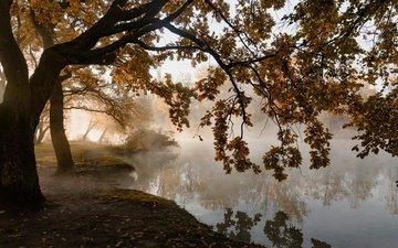 деревья, листья, туман, осень, пруд, тишина