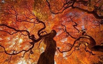 деревья, листва, осень