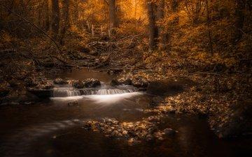 деревья, мостик, лес, листва, осень, речка