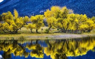 деревья, озеро, горы, природа, отражение, осень, сша, колорадо, палмер лейк