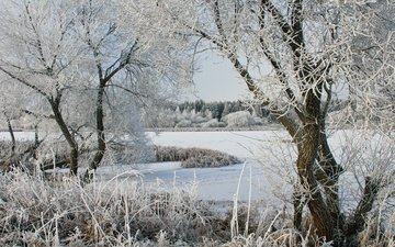 деревья, озеро, снег, зима, мороз, иней
