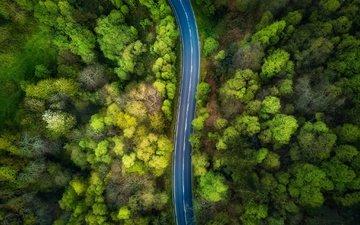 дорога, деревья, природа, лес, вид сверху
