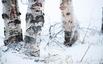 trees, snow, nature, winter, background, birch