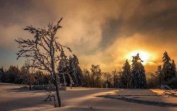 небо, деревья, солнце, снег, лес, закат, зима, следы