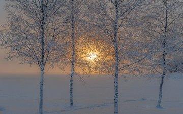 деревья, солнце, снег, природа, зима, иней