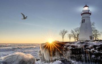 деревья, солнце, зима, лучи, море, маяк, побережье, лёд, чайка