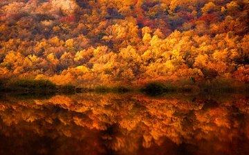 деревья, вода, лес, отражения, краски, осень