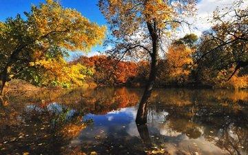 деревья, вода, отражение, листва, осень