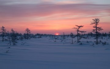 trees, sunrise, snow, winter, dawn, russia, sakhalin