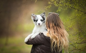 girl, dog, puppy, hair, nami, the border collie, alicja zmysłowska