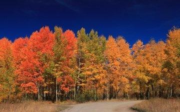 дорога, деревья, лес, листья, осень, сша, вайоминг, гранд-титон