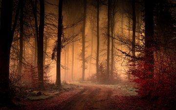 дорога, деревья, лес, листья, туман, осень