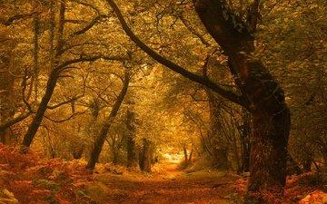 дорога, деревья, лес, листва, осень