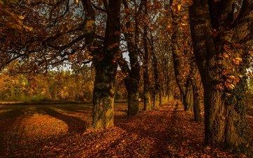 дорога, деревья, листья, осень