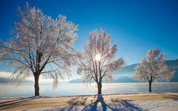 небо, дорога, деревья, озеро, солнце, снег, зима