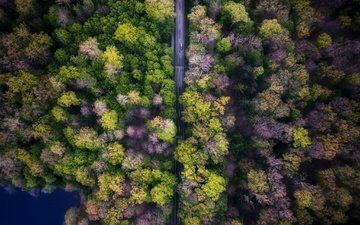 road, trees, nature, forest, machine, the view from the top