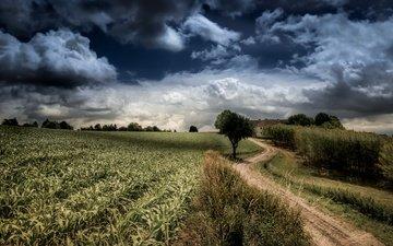 небо, дорога, облака, деревья, природа, поле
