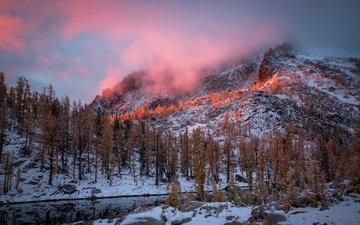 деревья, горы, снег, зима, утро