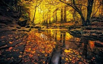 камни, лес, листья, ручей, осень, германия