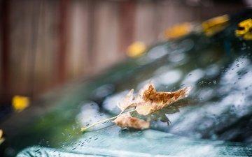 drops, autumn, sheet, rain, glass, bokeh