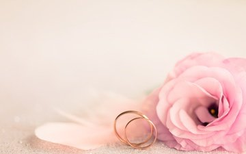flower, petals, ring, wedding, holiday, eustoma