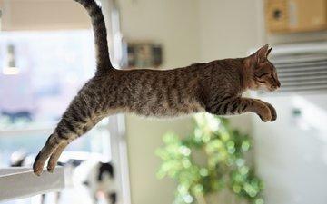 кот, лапы, стол, прыжок, хвост