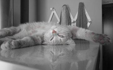 кот, пушистый, серый, отдыхает