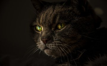 cat, mustache, look, black background, green eyes