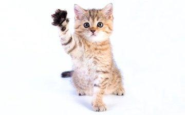 eyes, muzzle, look, kitty, cute, foot