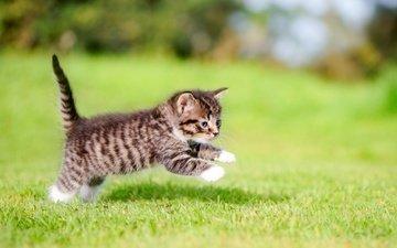 grass, cat, kitty, jump, baby, legs