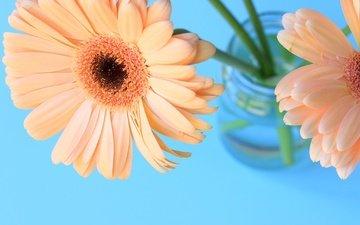 цветы, лепестки, букет, гербера