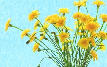 цветы, лепестки, букет, стебель, желтые, полевые цветы