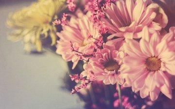 цветы, лепестки, букет, хризантемы, боке