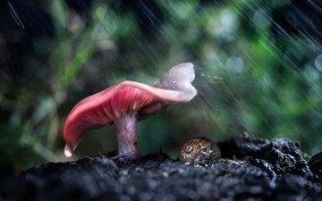 лес, макро, гриб, дождь, улитка
