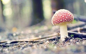 forest, macro, mushroom