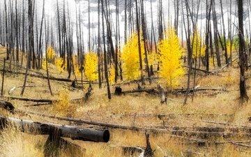 лес, склон, осень, сша, колорадо, аспен