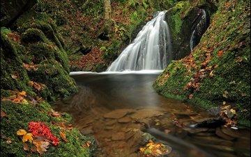 лес, листья, водопад, осень, мох, германия, рейнланд-пфальц