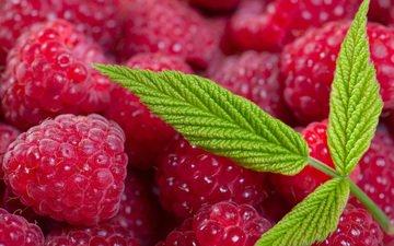 листья, макро, малина, лето, ягоды