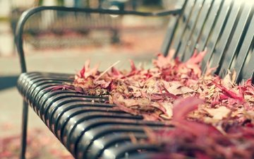 leaves, macro, autumn, bench, falling leaves