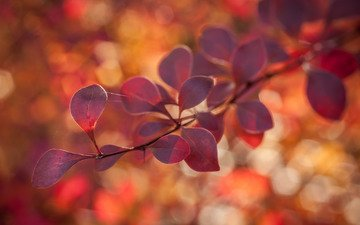 природа, листья, макро, фон, блики, веточка, паутина