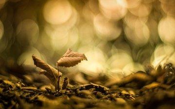 природа, листья, макро, фон, блики