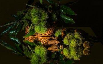 зелень, листья, отражение, черный фон, натюрморт, каштан