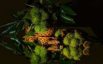 greens, leaves, reflection, black background, still life, chestnut