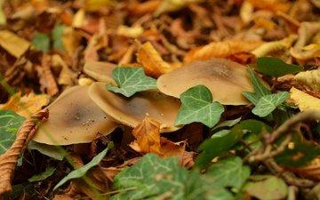 листва, осень, грибы