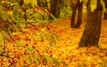 природа, фон, листва, осень