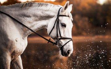 лошадь, природа, брызги, профиль, конь, белая