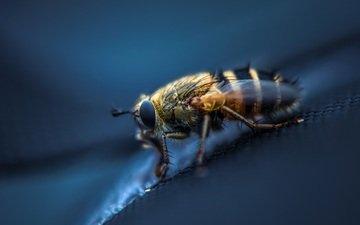 макро, насекомое, крылья, лапки, муха