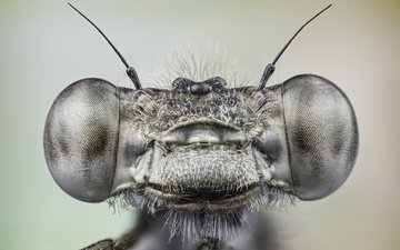 глаза, макро, насекомое, стрекоза, miguel del canto nieto