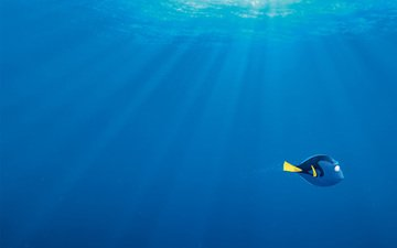 sea, cartoon, fish, blue, bubbles, rays of light, in finding dory, dori