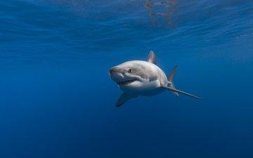 море, океан, рыба, акула, подводный мир